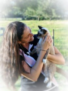 Pet sitter near Palm Harbor