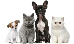 Pet sitters in Palm Harbor